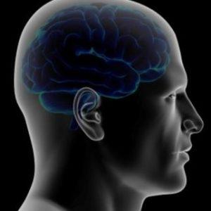 """Le magnétisme - avons-nous tous une """"boussole"""" dans le cerveau ?"""