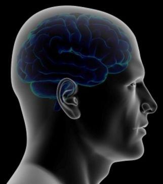 le magnétisme et le cerveau humain
