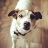 4 astuces pour communiquer par télépathie avec votre animal de compagnie