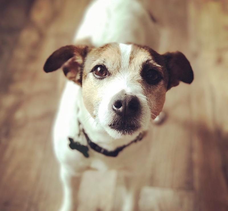 communiquer par télépathie avec votre animal de compagnie